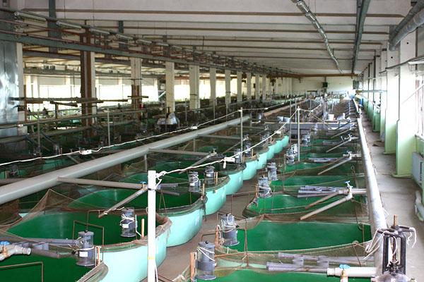 Производство выращивания рыбы 62