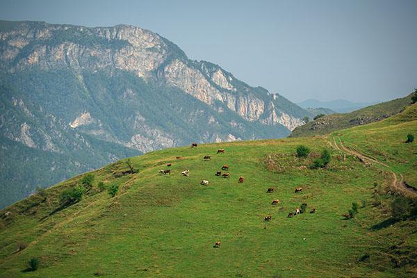 Экскурсии Горная Чечня туры Тазбичи