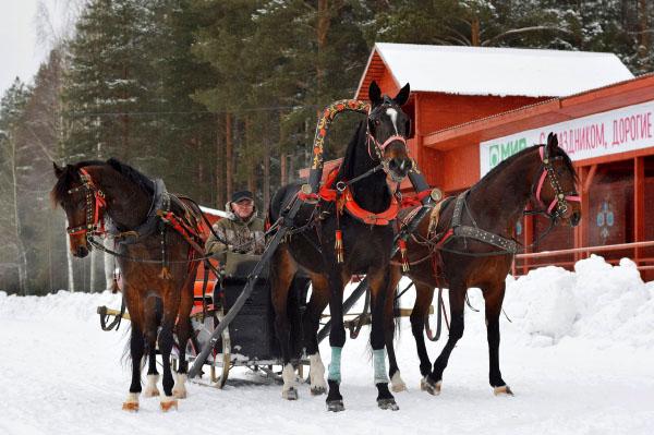 Вельск Хорошевский конный завод Архангельская область